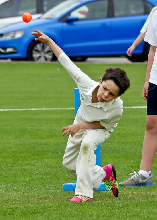 Cricket_03.jpg