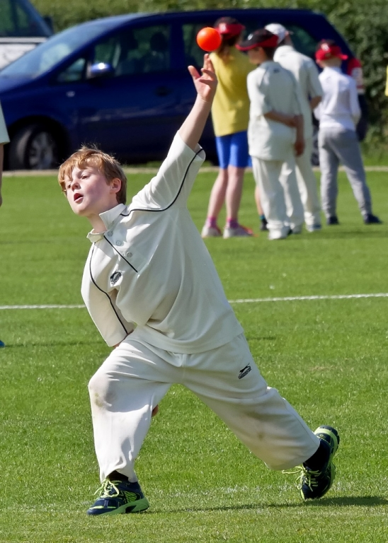 Cricket_15.jpg
