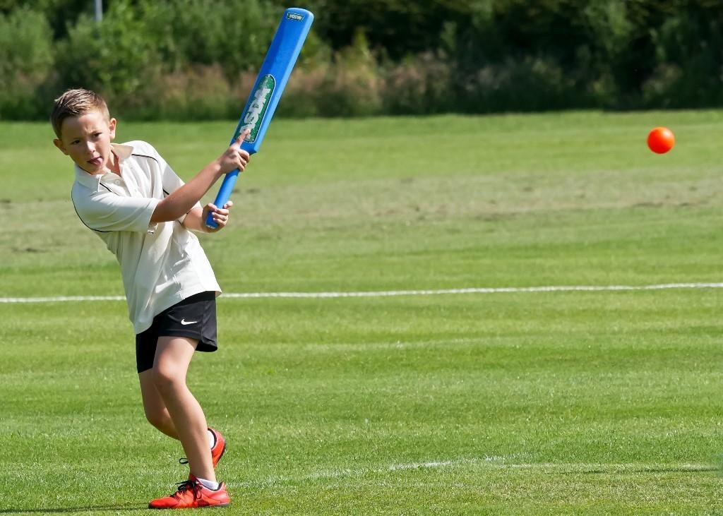 Cricket_17.jpg