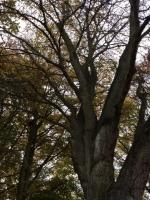 Fairy Forest Spells (14).jpg