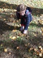 Forest Fairy Wands 2.jpg