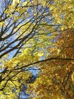 Forest Fairy Wands 26.jpg