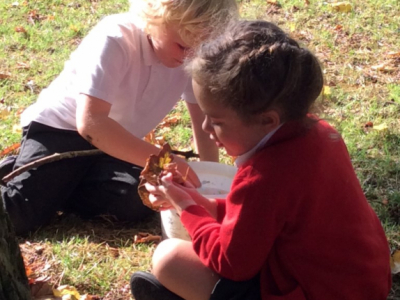 Reception in the Forest School (18)
