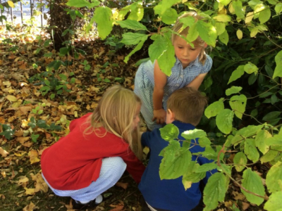 Reception in the Forest School (20)