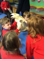 Spring Term in Year 2 (14)