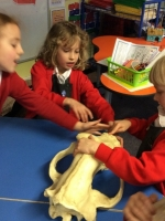 Spring Term in Year 2 (19)