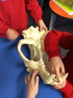 Spring Term in Year 2 (22)