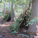 Hagg Wood_36