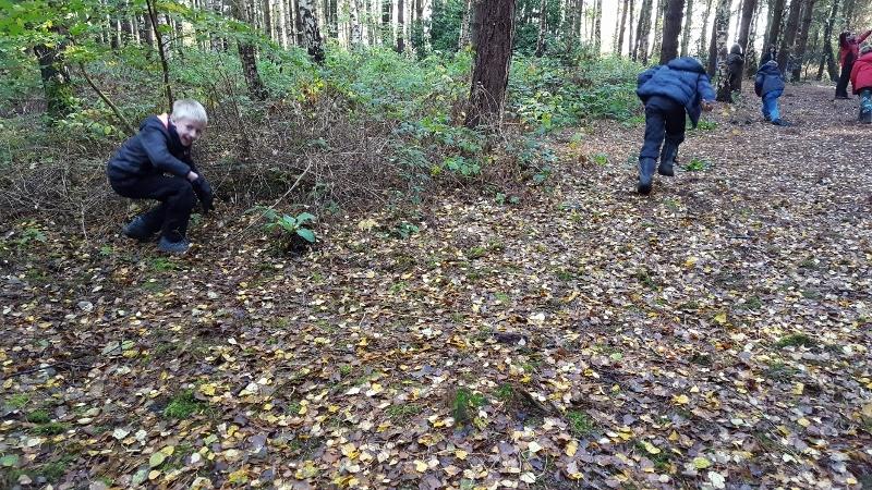 Y4 in the Woods (5).jpg