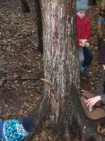 woodland adventures 003 (800x600).jpg