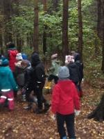 woodland adventures 019 (800x600).jpg